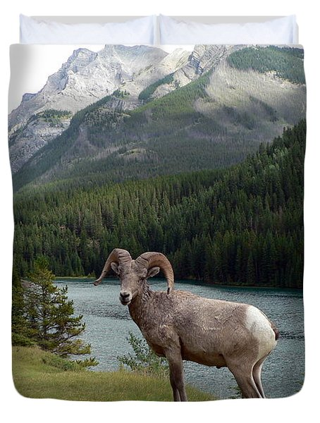 Portrait Of A Bighorn Sheep At Lake Minnewanka  Duvet Cover