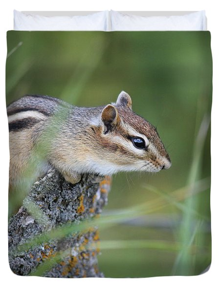 Duvet Cover featuring the photograph Portrait Of A Chipmunk by Penny Meyers