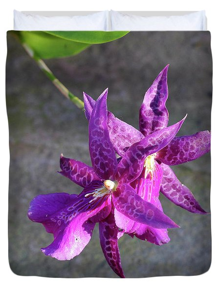 Duvet Cover featuring the photograph Potted And Purple by Rachel Cohen