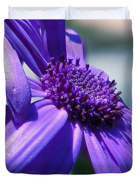 Pretty In Pericallis Duvet Cover by Rory Sagner