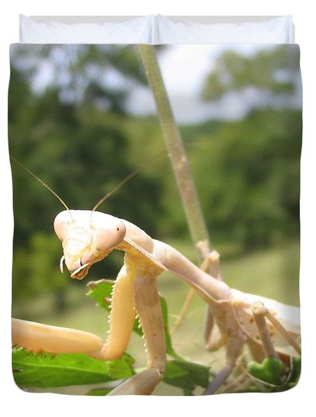 Preying Mantis Duvet Cover by Mark Robbins