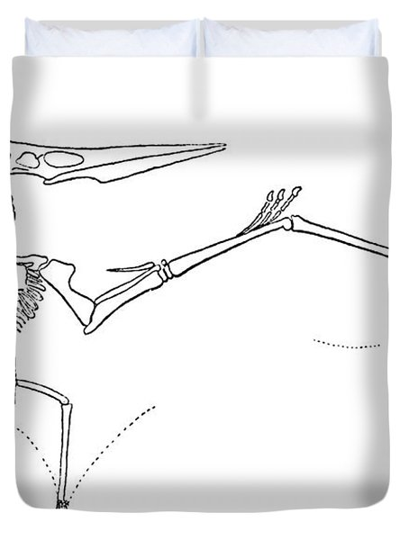 Pteranodon Longiceps Duvet Cover by Science Source