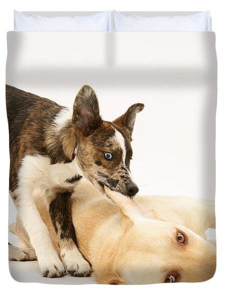 Pup Biting Lab On The Ear Duvet Cover by Mark Taylor