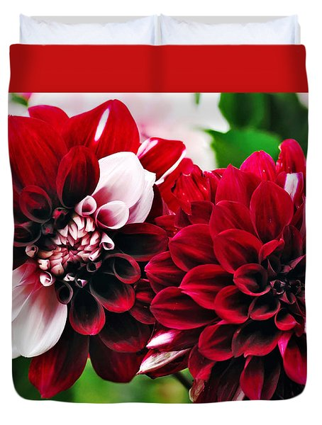 Red And White Variegated Dahlia Duvet Cover by Kaye Menner