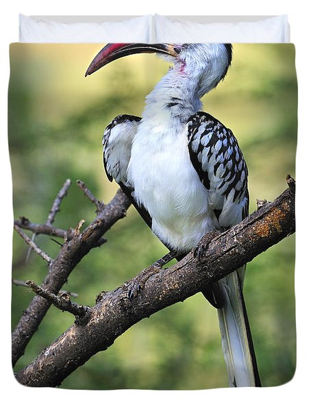 Red-billed Hornbill Duvet Cover by Tony Beck