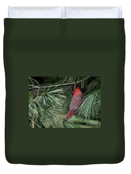 Duvet Cover featuring the photograph Red Cardinal In Green Pine by Nava Thompson