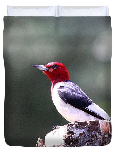 Red-headed Woodpecker - Statue Duvet Cover