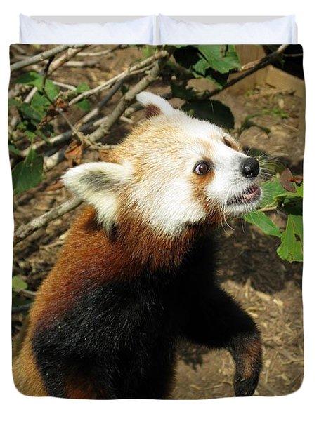 Red Panda Feeding Time Duvet Cover by Ausra Huntington nee Paulauskaite
