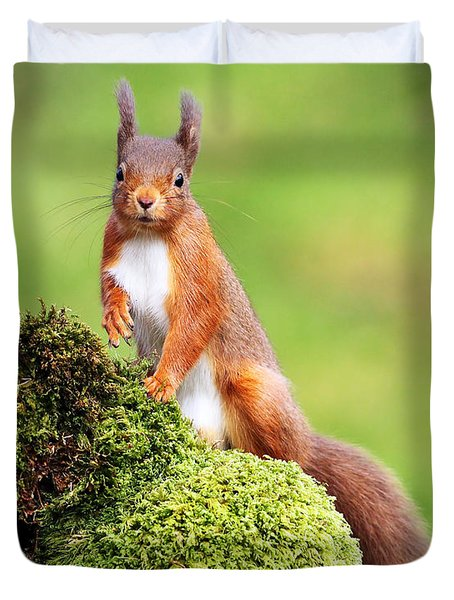 Red Squirrel Duvet Cover by Grant Glendinning