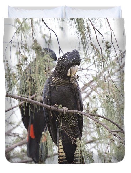 Red Tailed Black Cockatoos Duvet Cover by Douglas Barnard