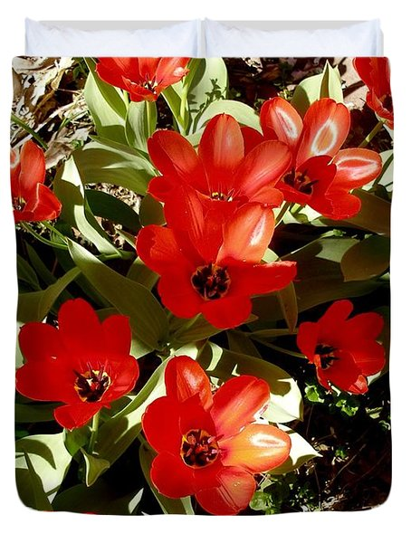 Duvet Cover featuring the photograph Red Tulips by David Pantuso