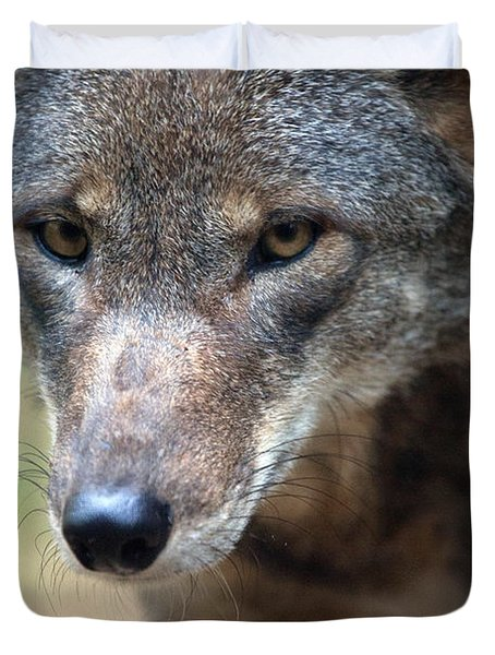 Red Wolf Closeup Duvet Cover by Karol Livote