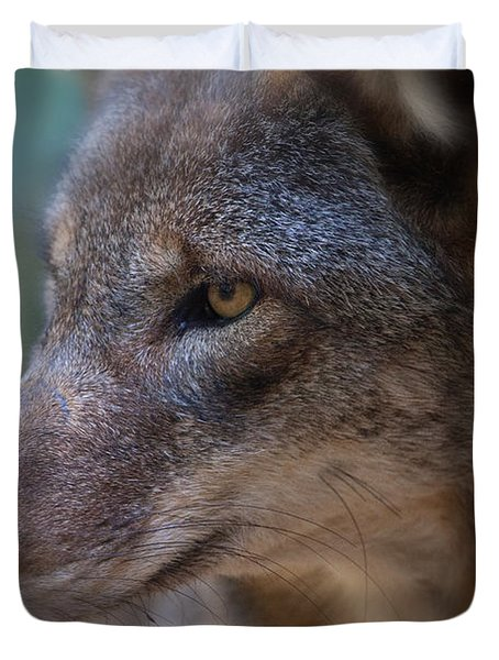 Red Wolf Stare Duvet Cover by Karol Livote