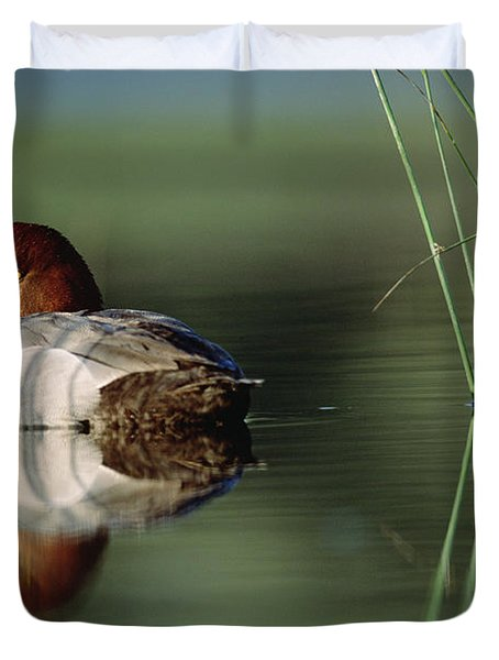 Redhead Duck Male With Reflection Duvet Cover