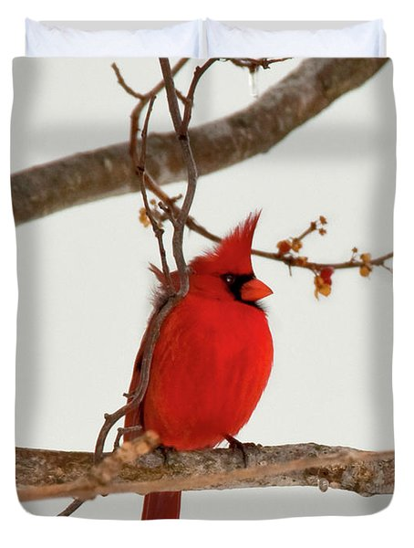 Righteous Cardinal Duvet Cover