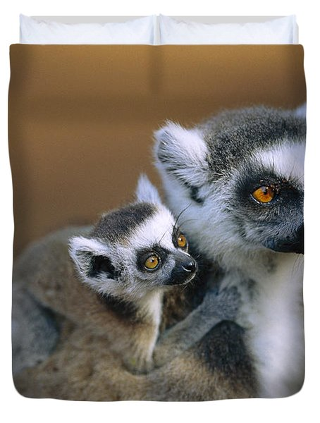 Ring-tailed Lemur Mother Carrying Baby Duvet Cover by Cyril Ruoso