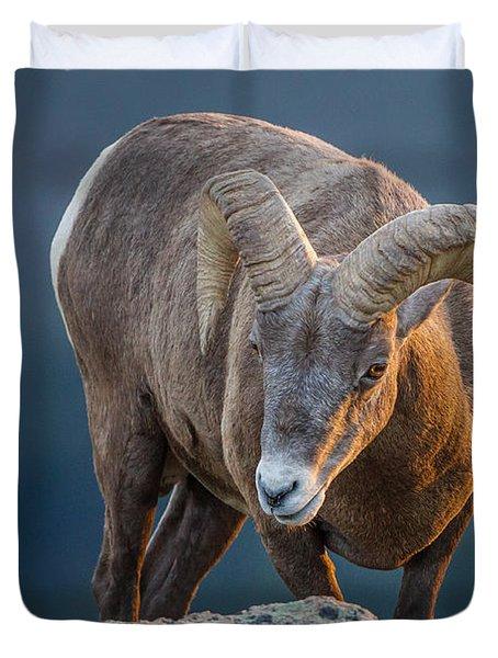 Rocky Mountain Big Horn Ram Duvet Cover