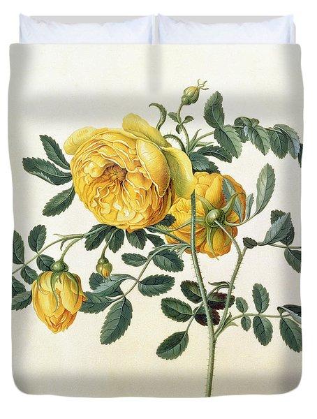 Rosa Hemispherica Duvet Cover by Georg Dionysius Ehret