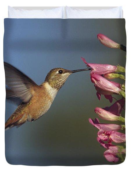 Rufous Hummingbird Feeding On Flowers Duvet Cover