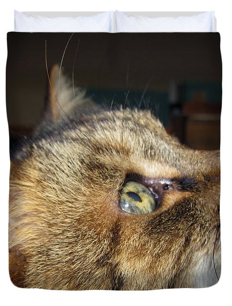 Duvet Cover featuring the photograph Runcius- The King Kitty by Ausra Huntington nee Paulauskaite