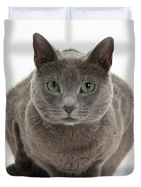 Russian Blue Cat Duvet Cover by Mark Taylor