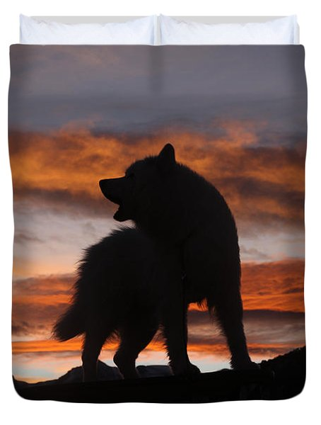 Samoyed At Sunset Duvet Cover by Kent Dannen and Photo Researchers