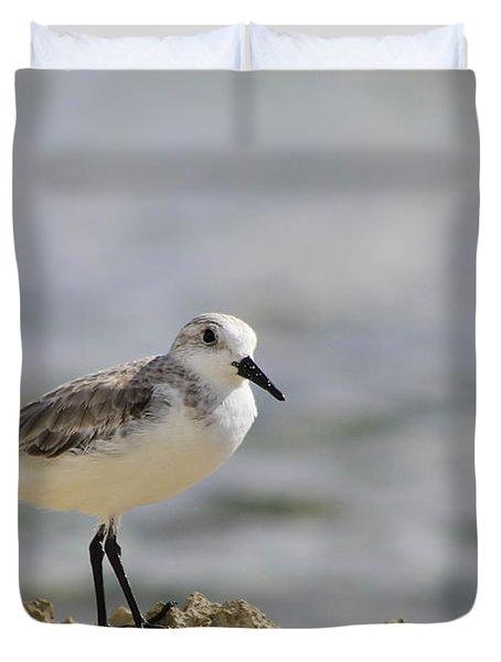 Sanderling Duvet Cover by Teresa Zieba