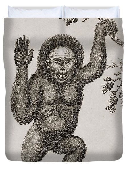 Satyrus, Ourang Outang. Pongo Or Jocko Duvet Cover by Ken Welsh