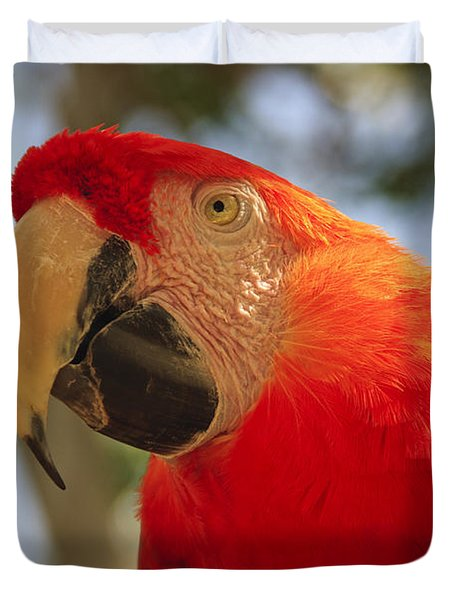 Scarlet Macaw Parrot Duvet Cover by Adam Romanowicz