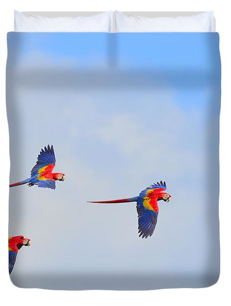 Scarlet Macaws Duvet Cover by Tony Beck