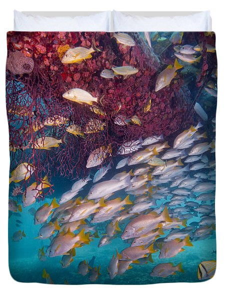 Schools Of Gray Snapper, Yellowtail Duvet Cover by Terry Moore