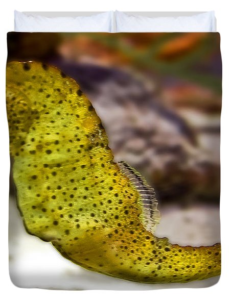 Seahorse Of Course Duvet Cover by DigiArt Diaries by Vicky B Fuller