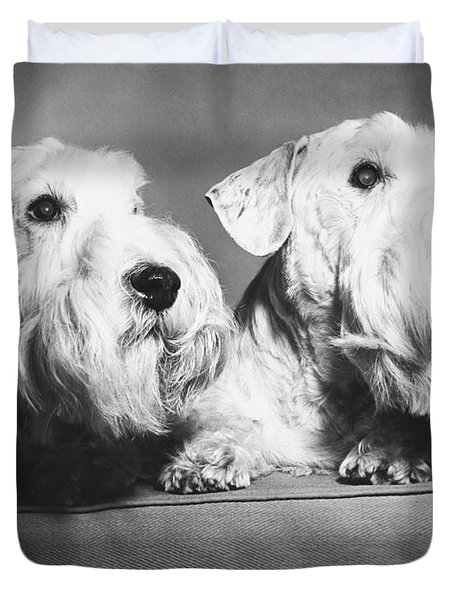 Sealyham Terriers Duvet Cover by M E Browning and Photo Researchers