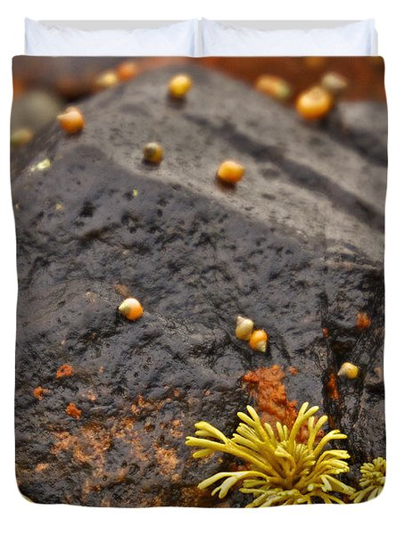 Seashells By The Seashore Duvet Cover