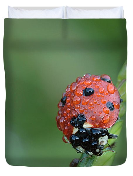 Duvet Cover featuring the photograph Seven-spotted Lady Beetle On Grass With Dew by Daniel Reed