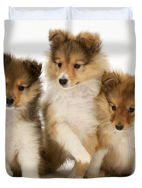 Sheltie Puppies Duvet Cover by Jane Burton