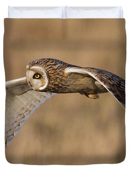 Short-eared Owl In Flight Duvet Cover
