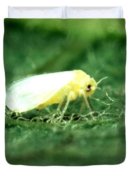 Silverleaf Whitefly Duvet Cover by Science Source