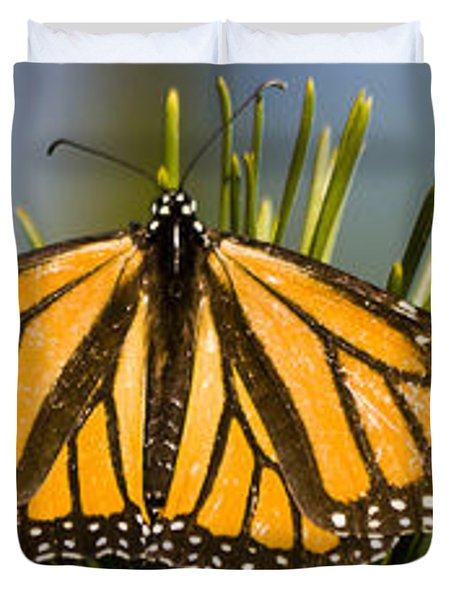 Single Monarch Butterfly Duvet Cover by Darcy Michaelchuk
