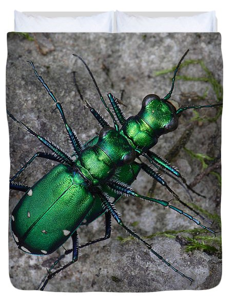 Duvet Cover featuring the photograph Six-spotted Tiger Beetles Copulating by Daniel Reed