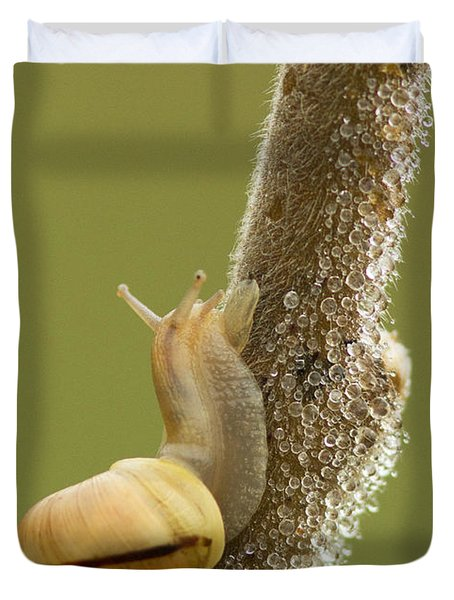 Snail In Dew Duvet Cover by Mircea Costina Photography