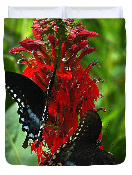 Spicebush Swallowtails Visiting Cardinal Lobelia Din041 Duvet Cover by Gerry Gantt