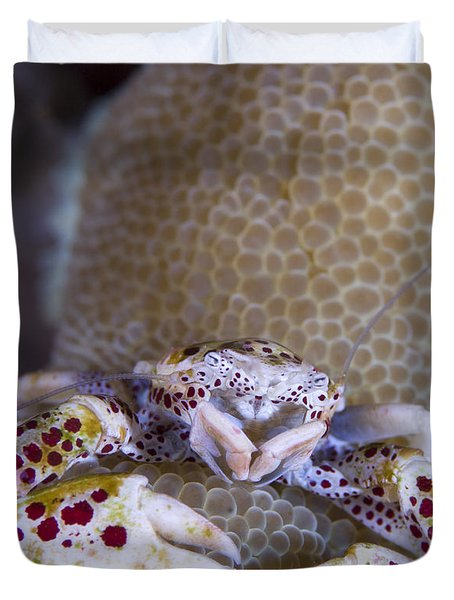Spotted Porcelain Crab Feeding Duvet Cover by Steve Jones
