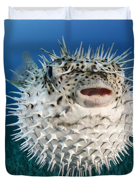 Spotted Porcupinefish IIi Duvet Cover