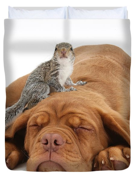 Squirrel And Puppy Duvet Cover by Mark Taylor