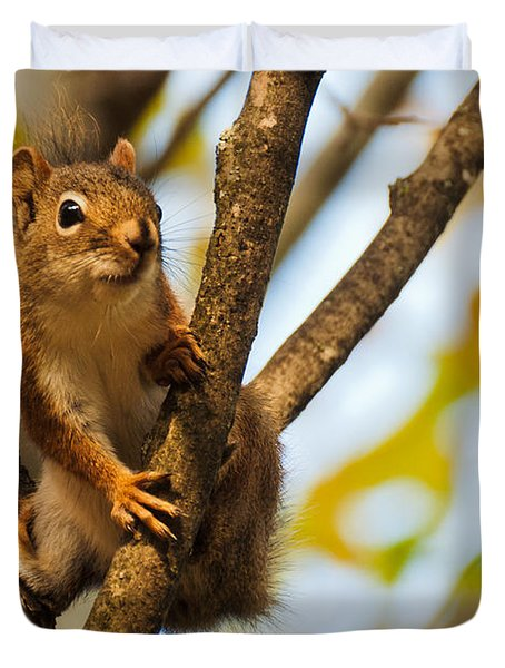 Squirrel On High Duvet Cover by Cheryl Baxter