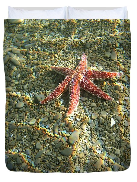 Starfish In Shallow Water Duvet Cover by Ted Kinsman
