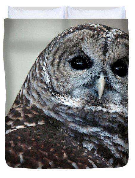Striped Owl Duvet Cover by LeeAnn McLaneGoetz McLaneGoetzStudioLLCcom