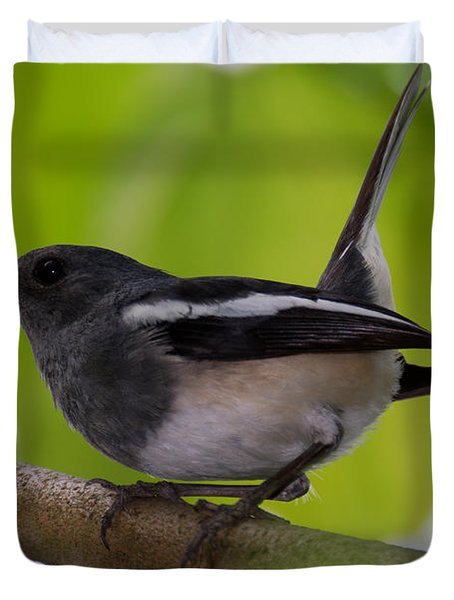 Duvet Cover featuring the photograph Study Of A Magpie-robin by Fotosas Photography