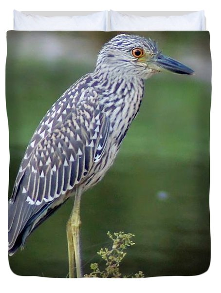 Stumped Night Heron Duvet Cover by Benanne Stiens